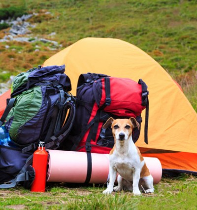 A-Canine-Camping-Trip